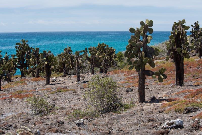 Isola del sud della plaza, Galapagos fotografie stock libere da diritti