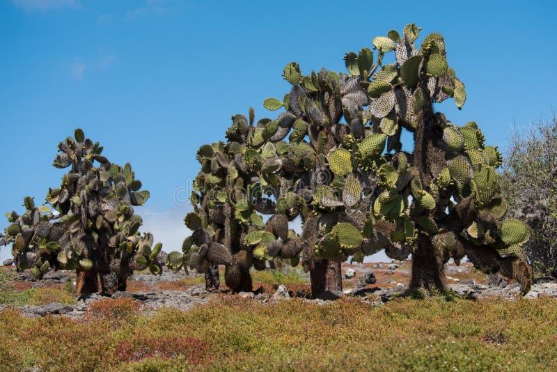 Isola del sud della plaza, Galapagos immagine stock libera da diritti