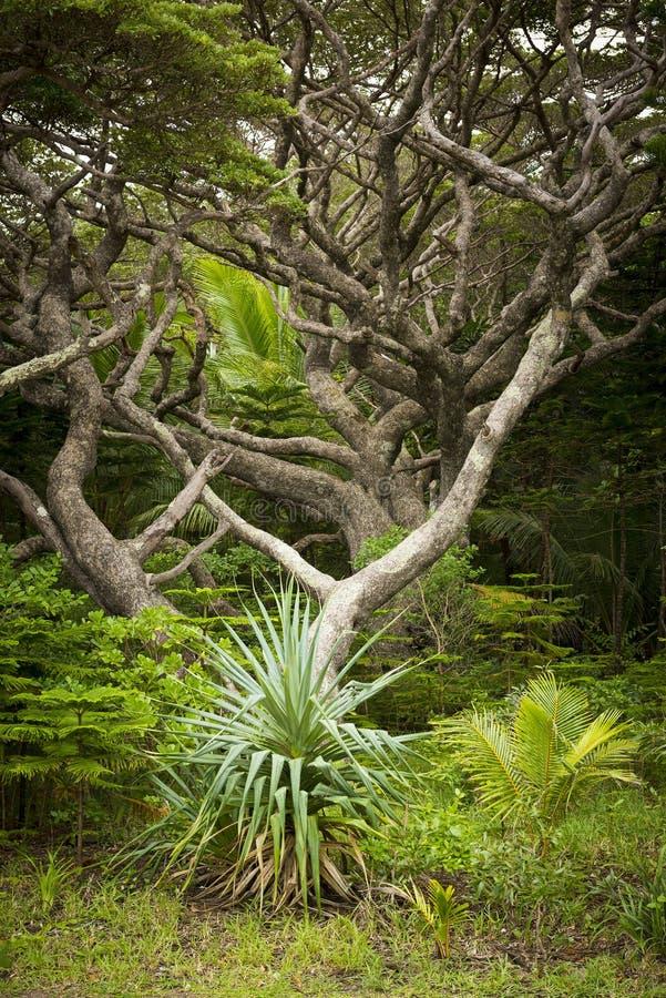 Isola della foresta pluviale dei pini fotografia stock