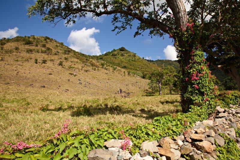 Isola della st Maarten fotografia stock libera da diritti