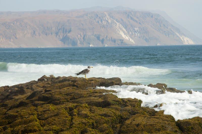Isola di Alacran - Arica - Cile fotografia stock libera da diritti