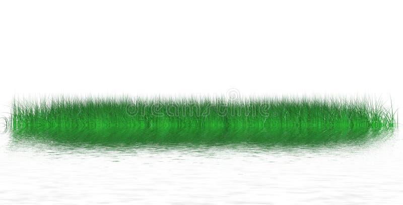 Isola di erba sugosa immagine stock