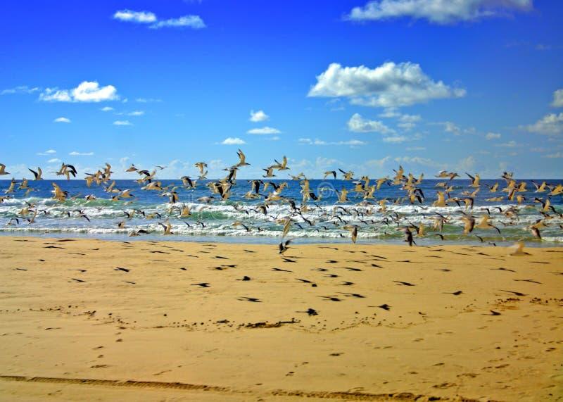 Isola di Fraser, Australia fotografie stock