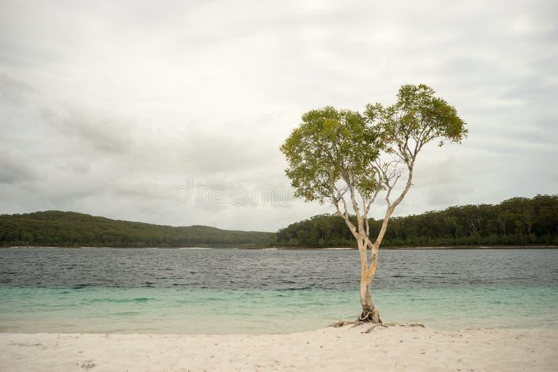 isola di fraser del mckenzie del lago Australia fotografia stock libera da diritti