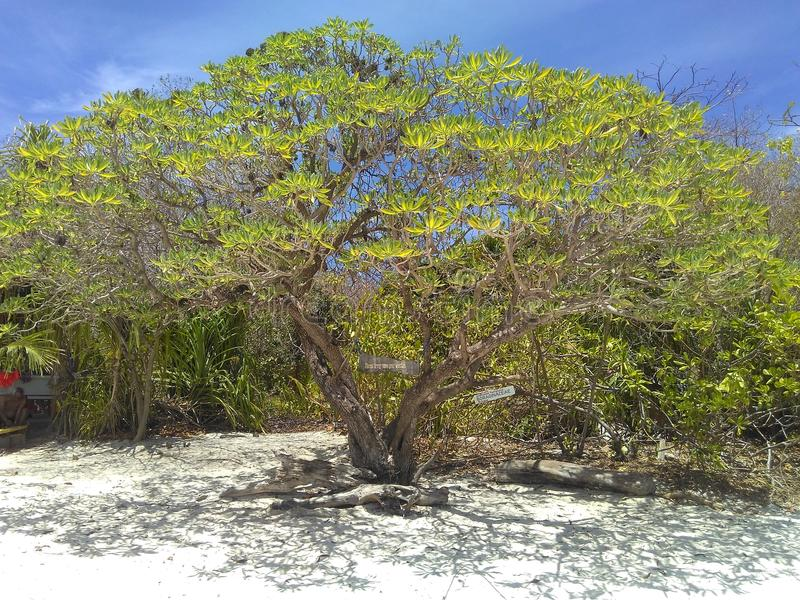 Isola di Mantique immagini stock libere da diritti