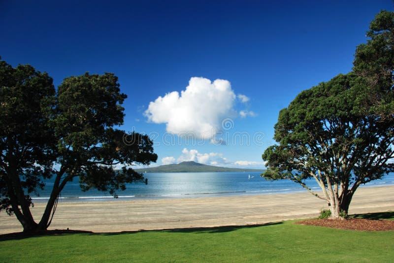 Isola di Rangitoto attraverso l'albero fotografia stock libera da diritti