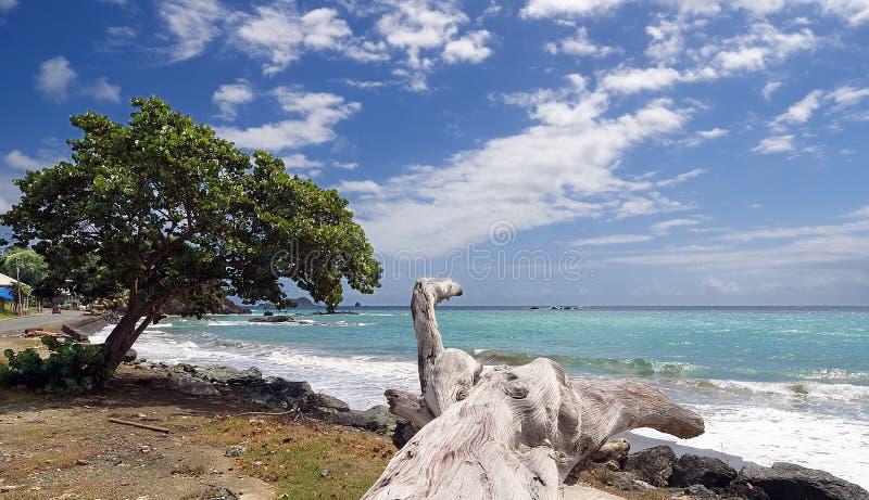 Isola di Tobago - spiaggia di Roxborough - spiaggia tropicale dell'Oceano Atlantico fotografia stock libera da diritti
