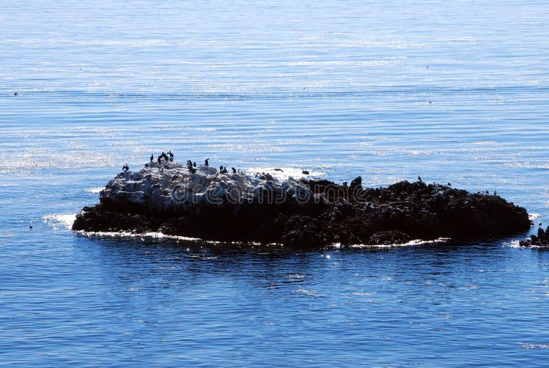Isola di uccello fotografie stock libere da diritti
