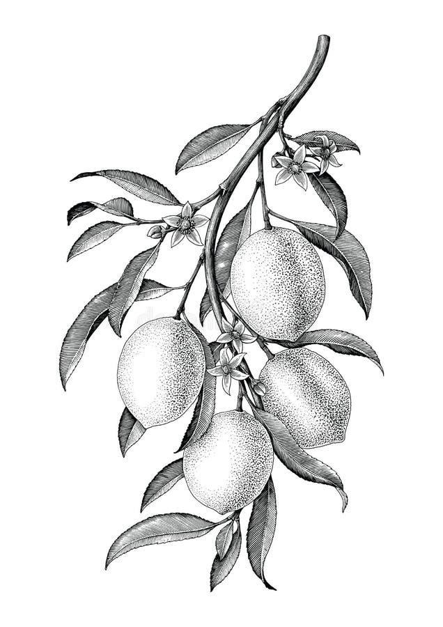 Isola för konst för gem för tappning för citronfilialillustration svartvit stock illustrationer