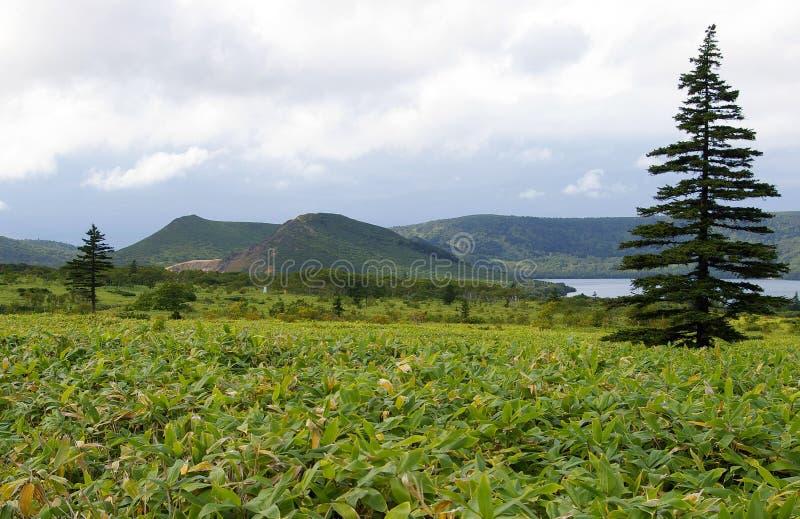 Isola Kunashir, Kurily fotografia stock libera da diritti