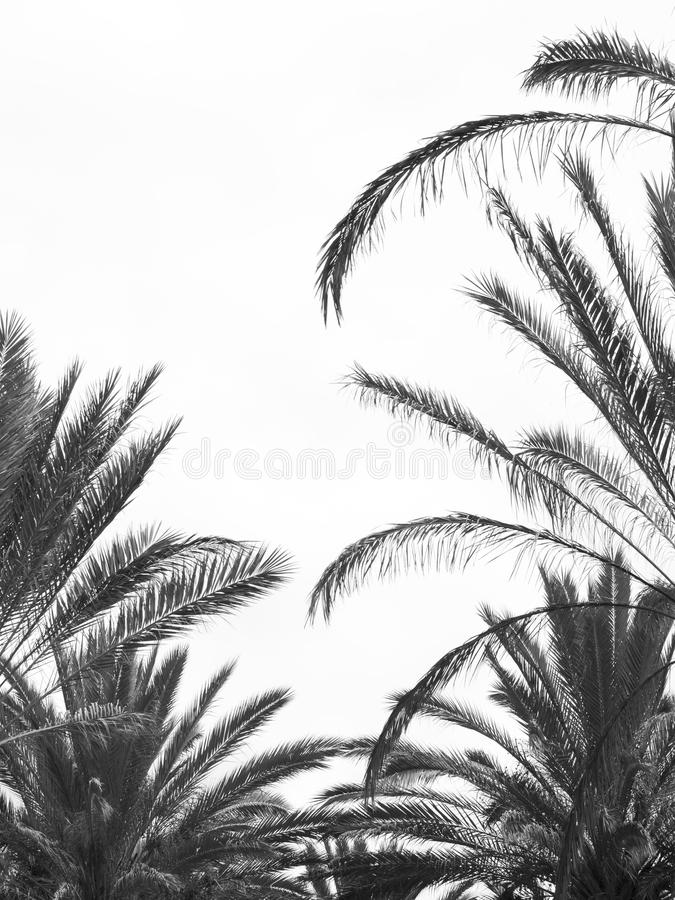 Isola mediterranea contenuta fotographia Corsica immagini stock libere da diritti
