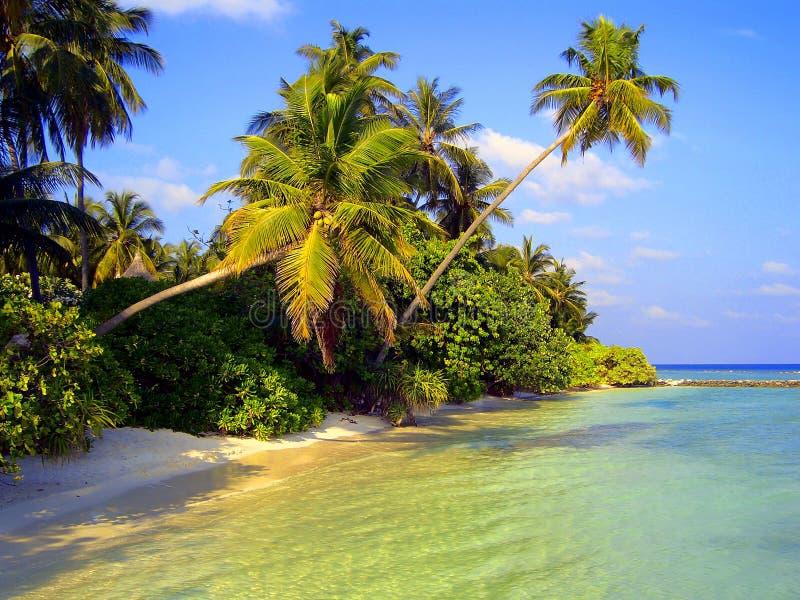 Isola in Oceano Indiano immagine stock libera da diritti