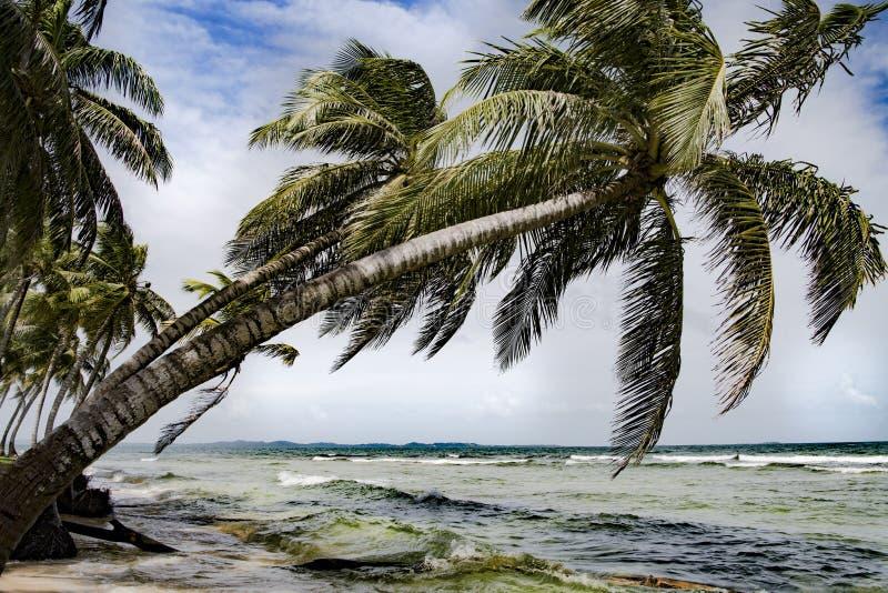 Isola tropicale con le palme piegate, tempo tempestoso, mare carribean, Panama fotografia stock libera da diritti