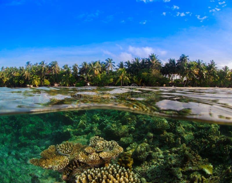 Isola tropicale Coral Reef fotografia stock