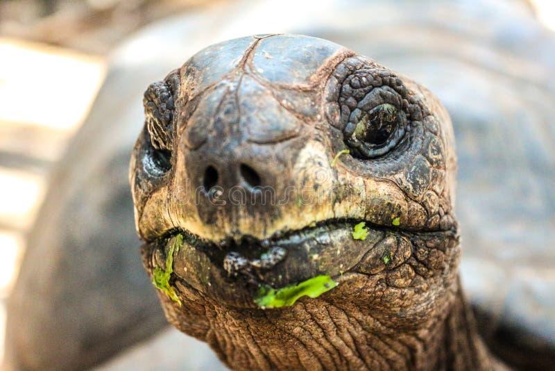 Isola Zanzibar della prigione della tartaruga fotografie stock libere da diritti