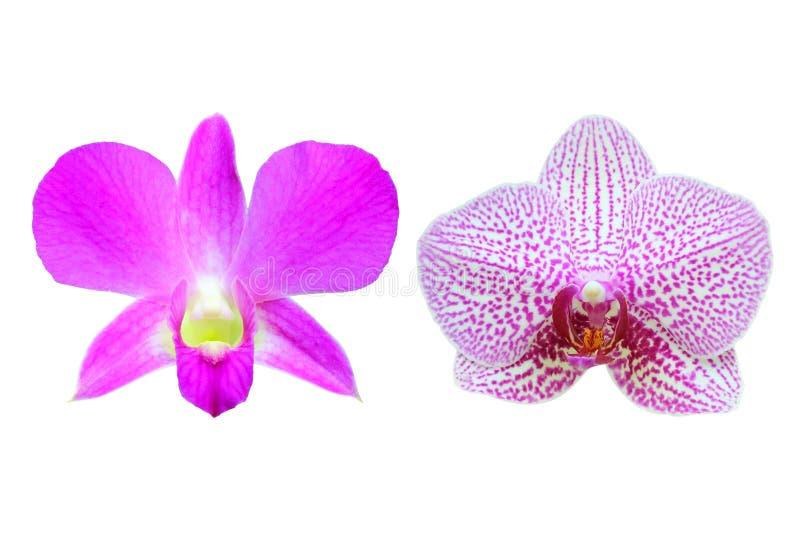 Isolado cor-de-rosa bonito da orquídea no fundo branco fotos de stock
