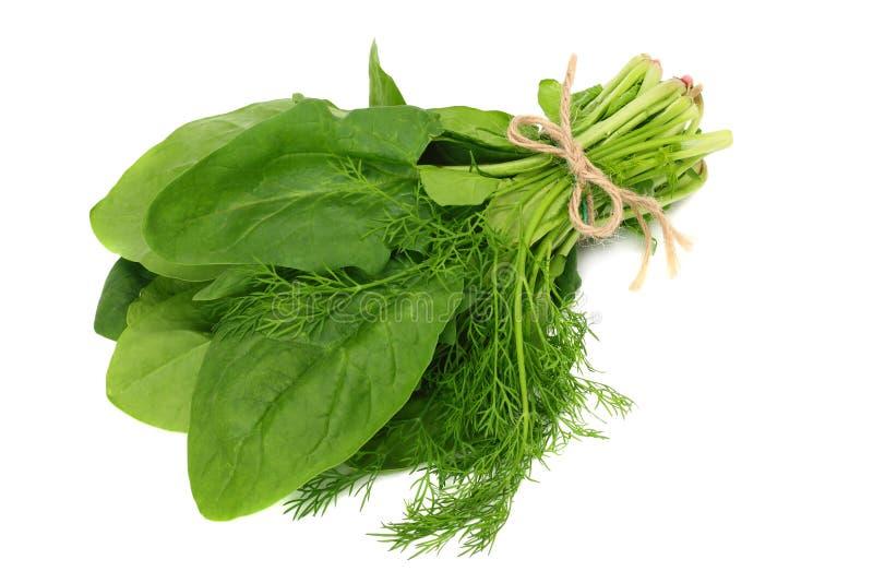 Isolado das folhas dos espinafres no fundo branco Alimento saudável fotografia de stock