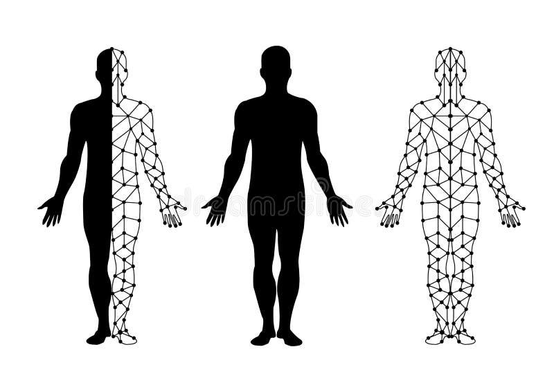 Isolado do corpo do vetor e malha do corpo Projeto da ilustração ilustração royalty free