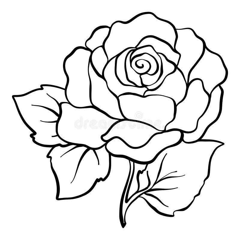 Isolado levantou-se Desenho de esboço Ilustração conservada em estoque do vetor ilustração do vetor