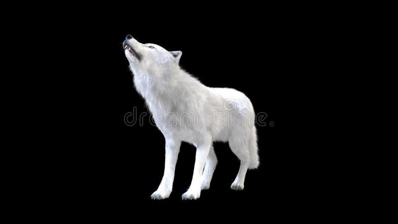 isolat de loup blanc de l'illustration 3d sur le fond foncé, loup arctique illustration stock