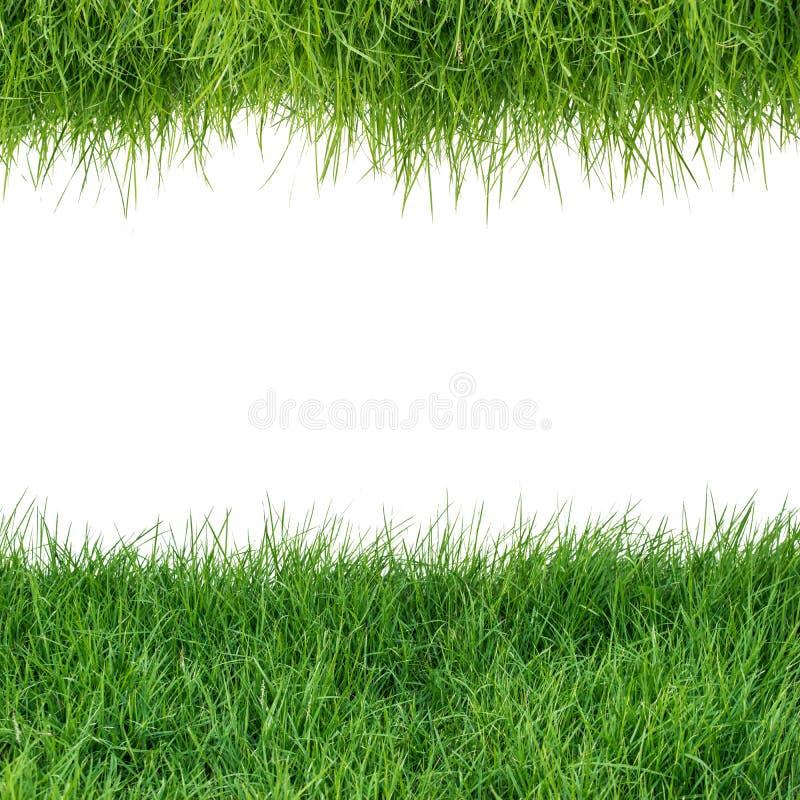 Isolat des grünen Grases auf weißem Hintergrund, lizenzfreies stockfoto
