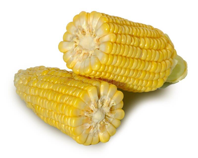 Isolat des Mais zwei stockbilder