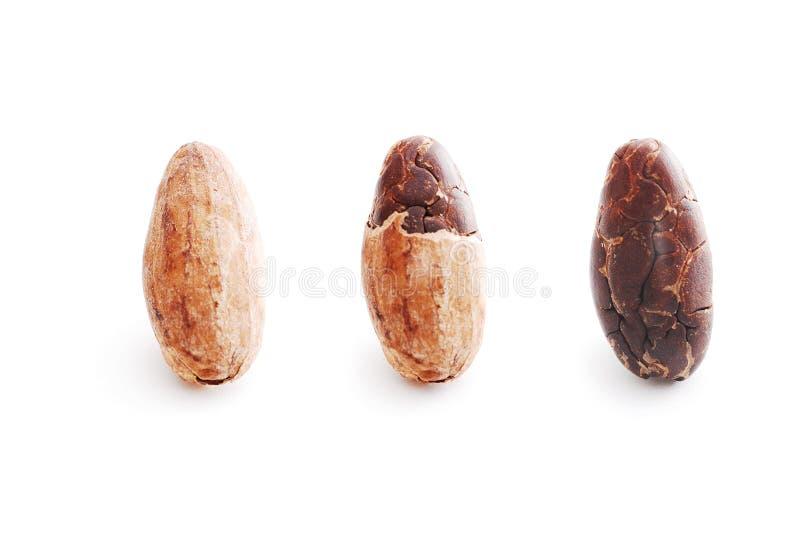Isolat för kakaoböna på vit royaltyfri fotografi