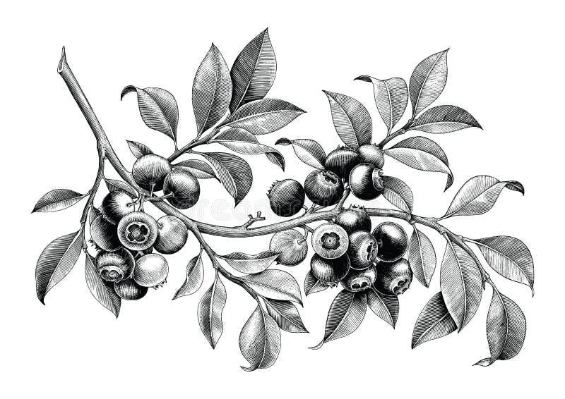 Isolat för konst för gem för tappning för blåbärhandteckning på den vita backgroen royaltyfri illustrationer