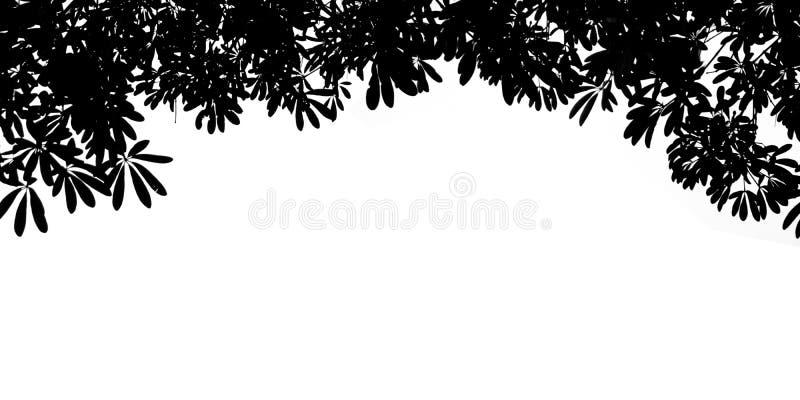 Isolat noir de feuilles de Bush de silhouette sur le fond blanc illustration stock