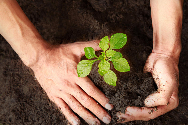 Growing trees with hand on the ground. royalty free stock photos