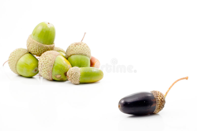 Isolated acorn stock images