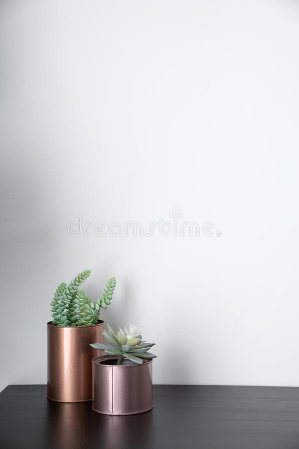 Isolated artificial plants copper vases and standing on black wooden top with white background / interior design / composition ba stock photos