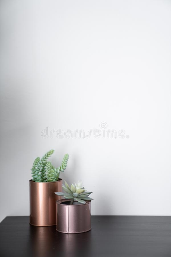 Isolated artificial plants copper vases and standing on black wooden top with white background / interior design / composition ba stock photo