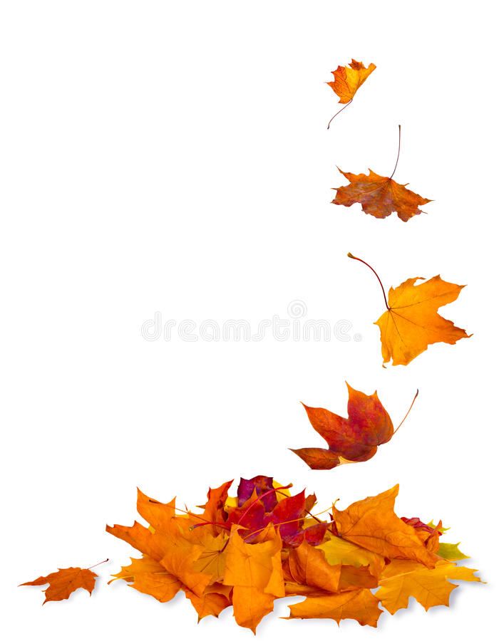 Isolated autumn leaves frame background stock photography