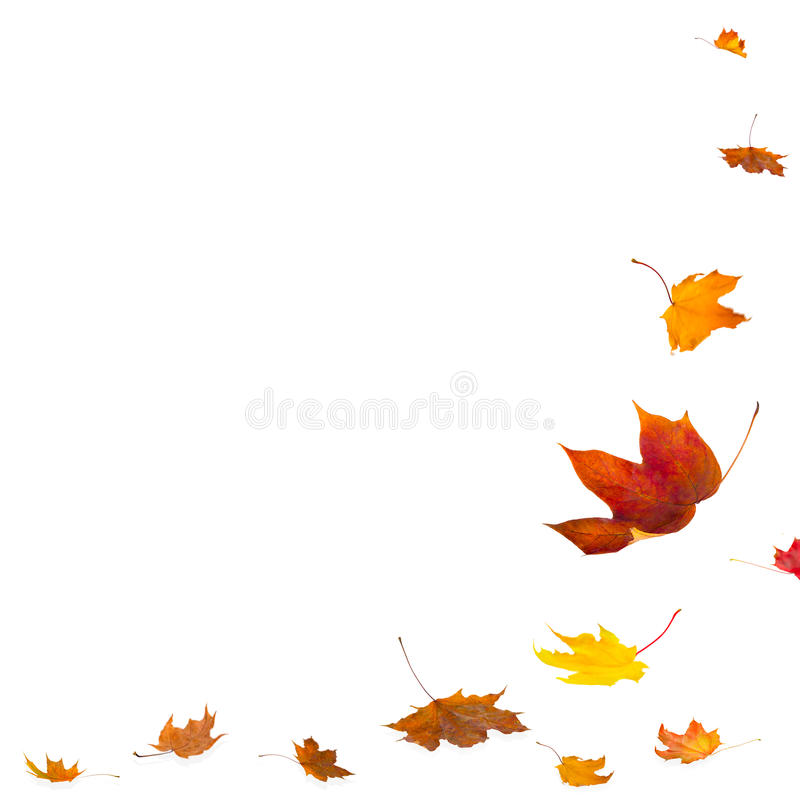 Isolated autumn leaves on white background stock photos