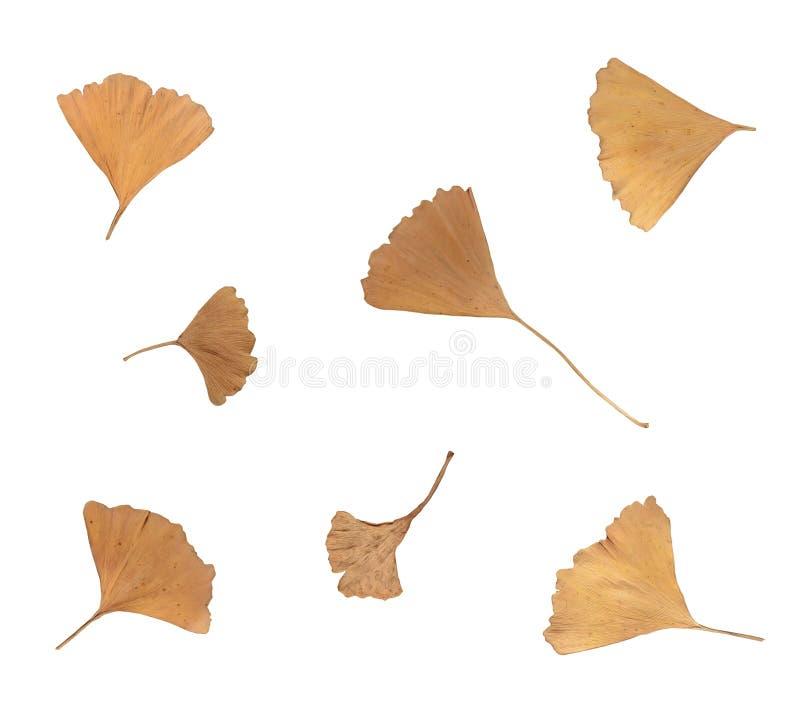 Isolated autumn tree leaves on empty background stock photos