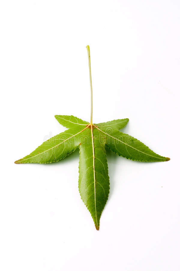 Isolated back leaf royalty free stock images