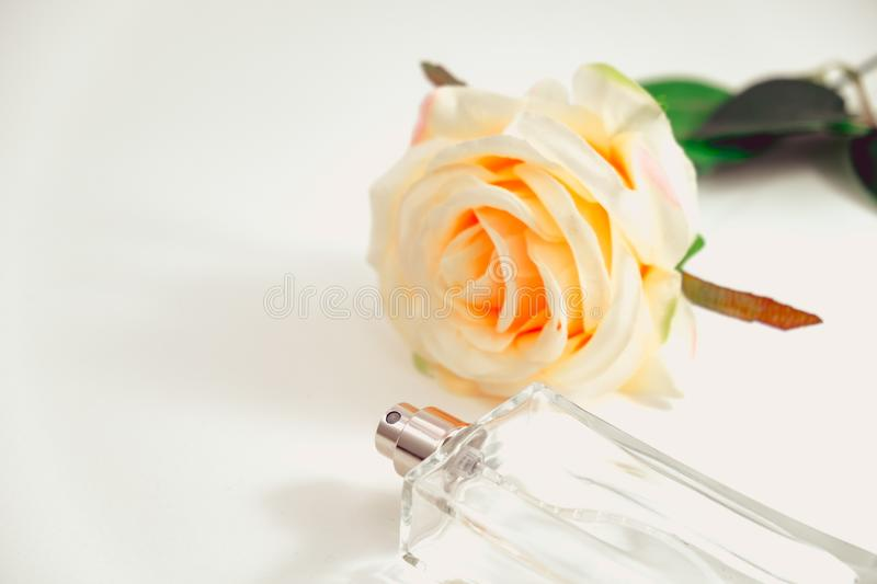 isolated background empty perfume bottle and beautiful rose place on table with copy space. image for flower, beauty, cosmetic, p stock image