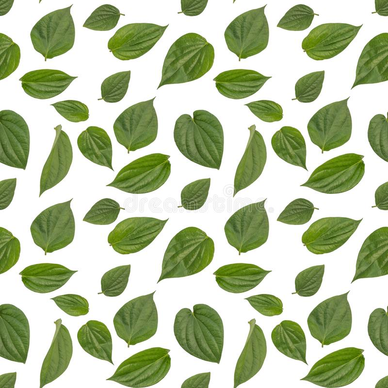 Isolated betel leaf seamless pattern in white background.  royalty free stock images