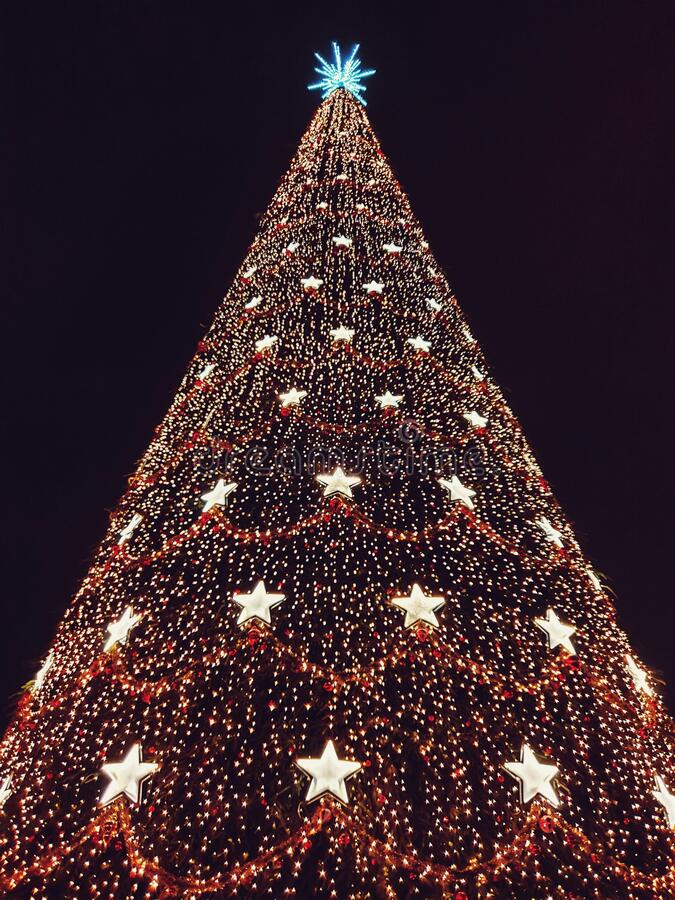 Isolated big Christmas tree with black background. In Bucharest city royalty free stock image
