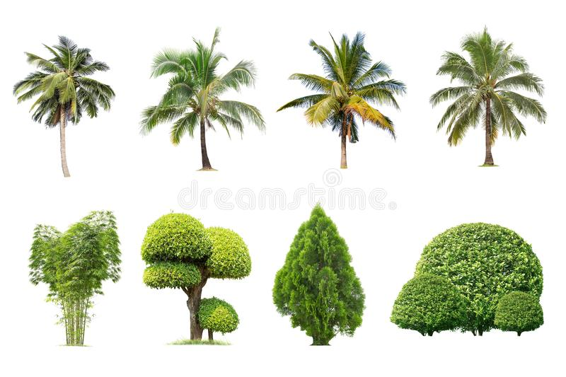 Isolated big tree on white background ,. The collection of trees.Large trees database Botanical garden organization elements of Asian nature in Thailand royalty free stock photography