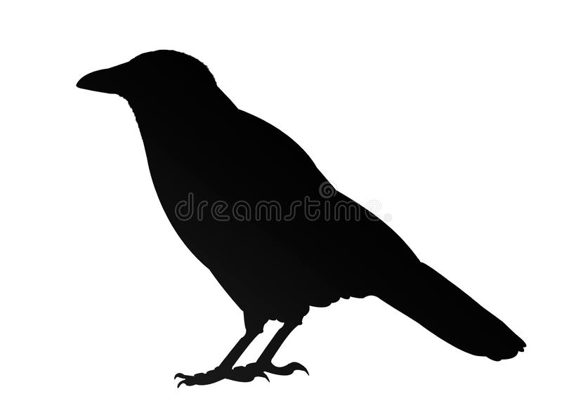 Isolated black crow silhouette on white background. Illustration vector illustration