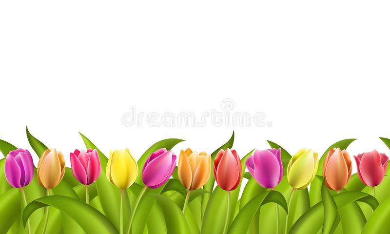 Isolated border on white with copy space of fresh red and orange spring tulips with green leaves vector illustration