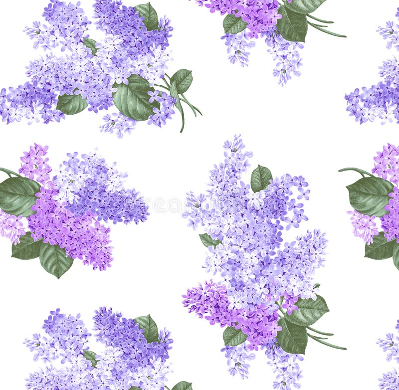 Isolated branches of lilacs on a white background stock illustration