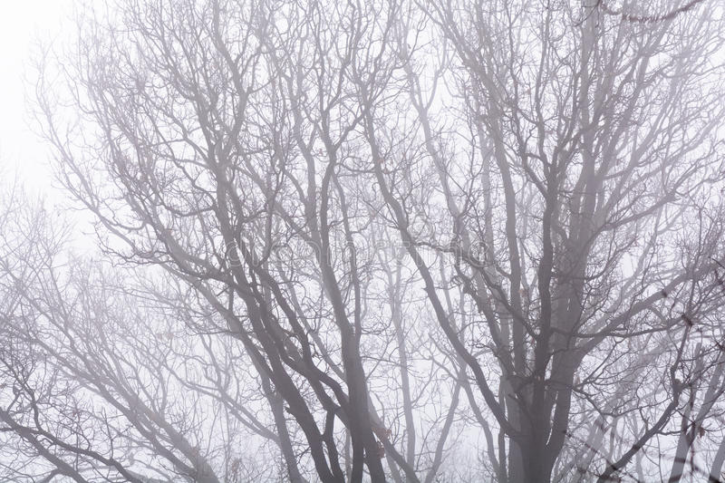 Isolated branches over white sky. Black bare tree branches on white frozen sky in wintertime. . royalty free stock photo