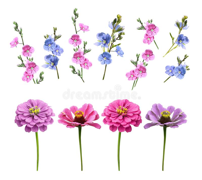 Set of flowers on a white background stock images