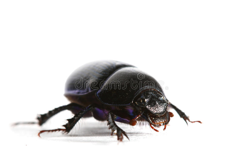 Isolated bug royalty free stock images
