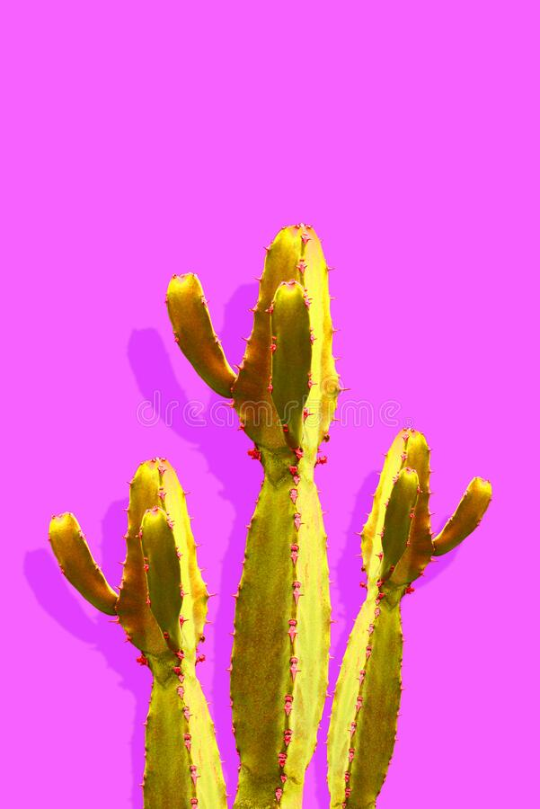 Isolated Cactus Fashion Minimale stilstand bij kunstontwerp Vanilla Trendy Purple Blue Color background stock foto