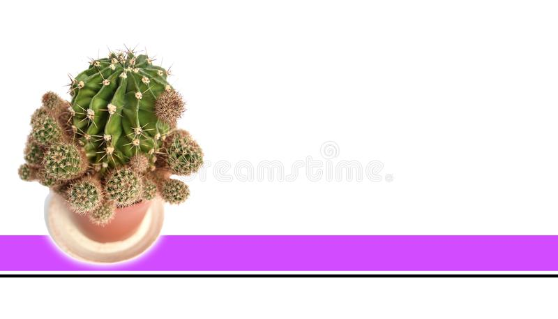 Isolated Cactus With white background stock photography