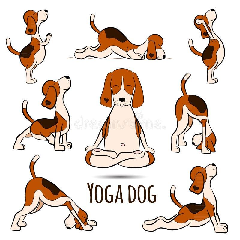 Isolated cartoon funny dog beagle doing yoga position. Surya Namaskara. San Salutation. Beagle illustration stock illustration